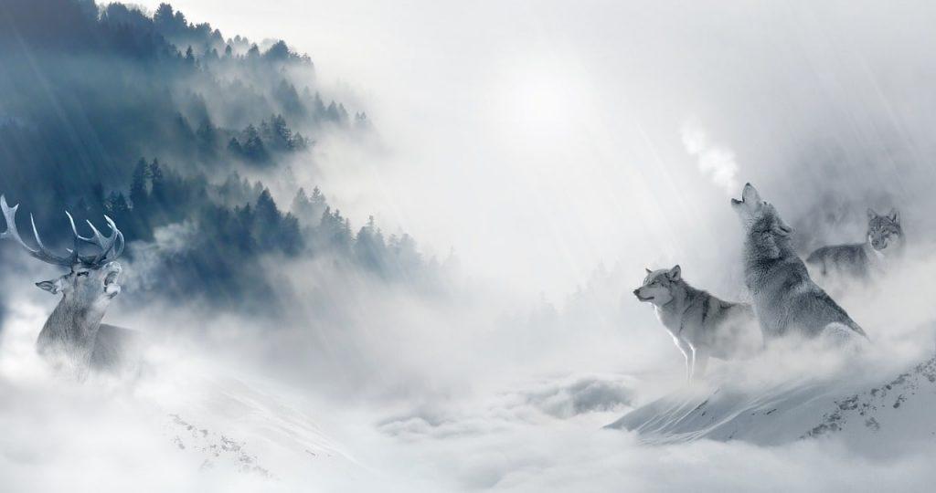 wolves_cursosdeinglesmonterrey